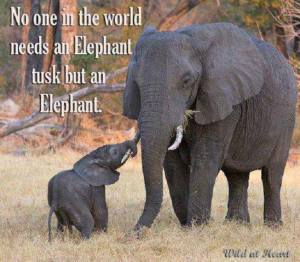 No one needs an elephant tusk but an elephant.